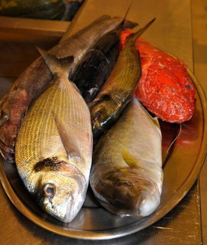 sicilian_fish_class