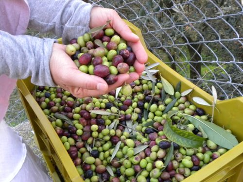 sicilian_olive_oil2