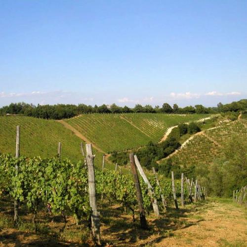 scarpa_winery4