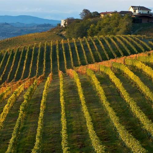 scarpa_winery7