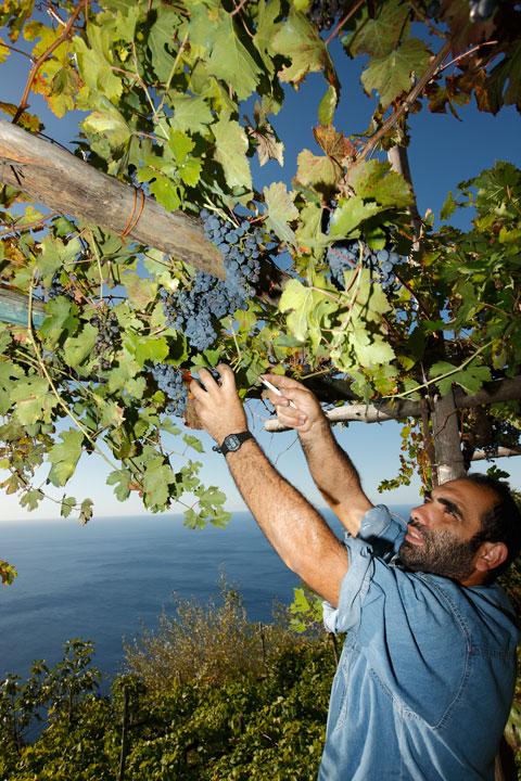 Amalfi-Winetasting-1